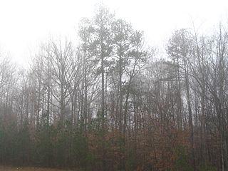 https://i1.wp.com/upload.wikimedia.org/wikipedia/commons/thumb/6/62/Trees_in_fog.jpg/320px-Trees_in_fog.jpg