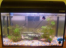Photo of water-filled glass tank containing with two green plants and pebbles on the bottom.