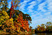 English: Leaves changing color in Lorain, Ohio