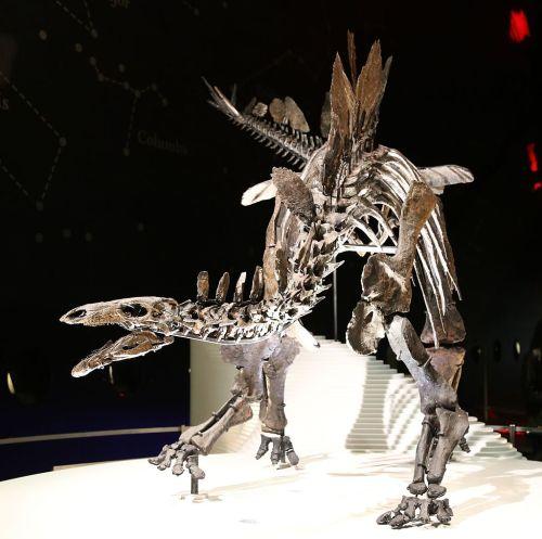 https://i1.wp.com/upload.wikimedia.org/wikipedia/commons/thumb/6/64/Stegosaurus_%28Natural_History_Museum%2C_London%29.jpg/1024px-Stegosaurus_%28Natural_History_Museum%2C_London%29.jpg?resize=500%2C497&ssl=1
