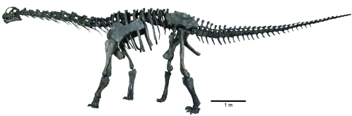 Colored Fig 36 Moabo Skeleton.tif