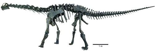 Colored Fig 36 Moabo Skeleton.tif