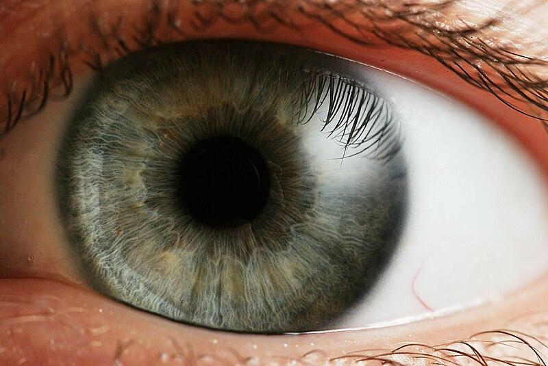 Human eye   Image: Wikipedia