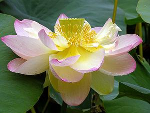 Awakening of Faith in the Mahayana