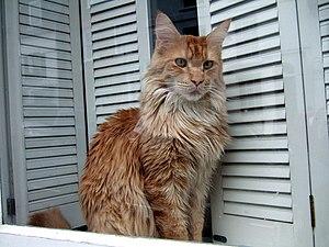 Cat window-gazing