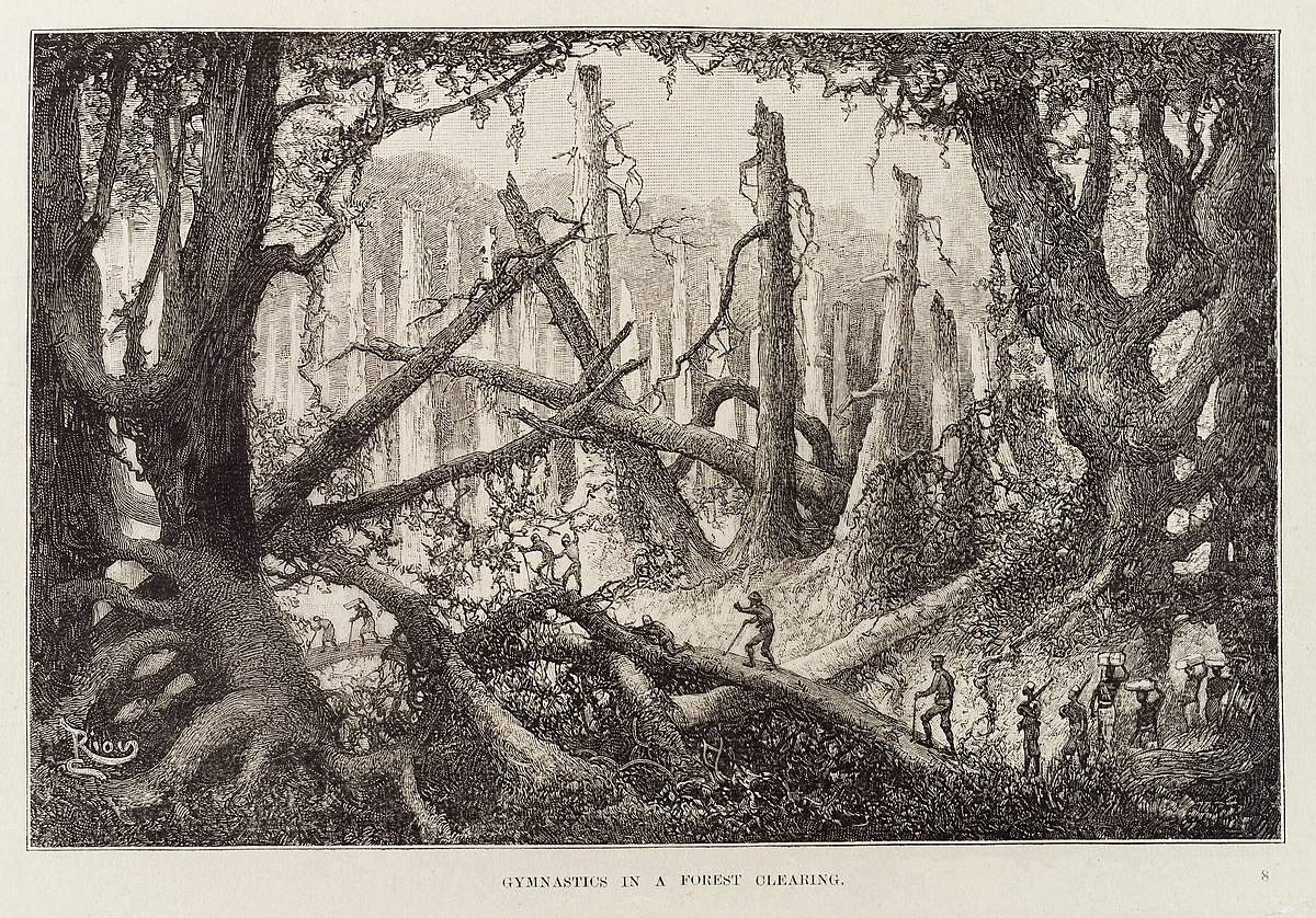 dense white smoke filling the scene whit irregular shapes on dark background in 4k white smoke drawing thin shapeless lines in darkness in 4k File Climbing Along A Fallen Tree In A Dense Forest Of Dead Trees Wellcome L0034828 Jpg Wikimedia Commons