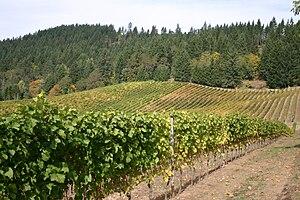 Vineyard in the Oregon wine region of Willamet...