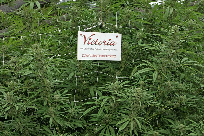 File:Women's Alliance For Medical Marijuana - Victoria.JPG