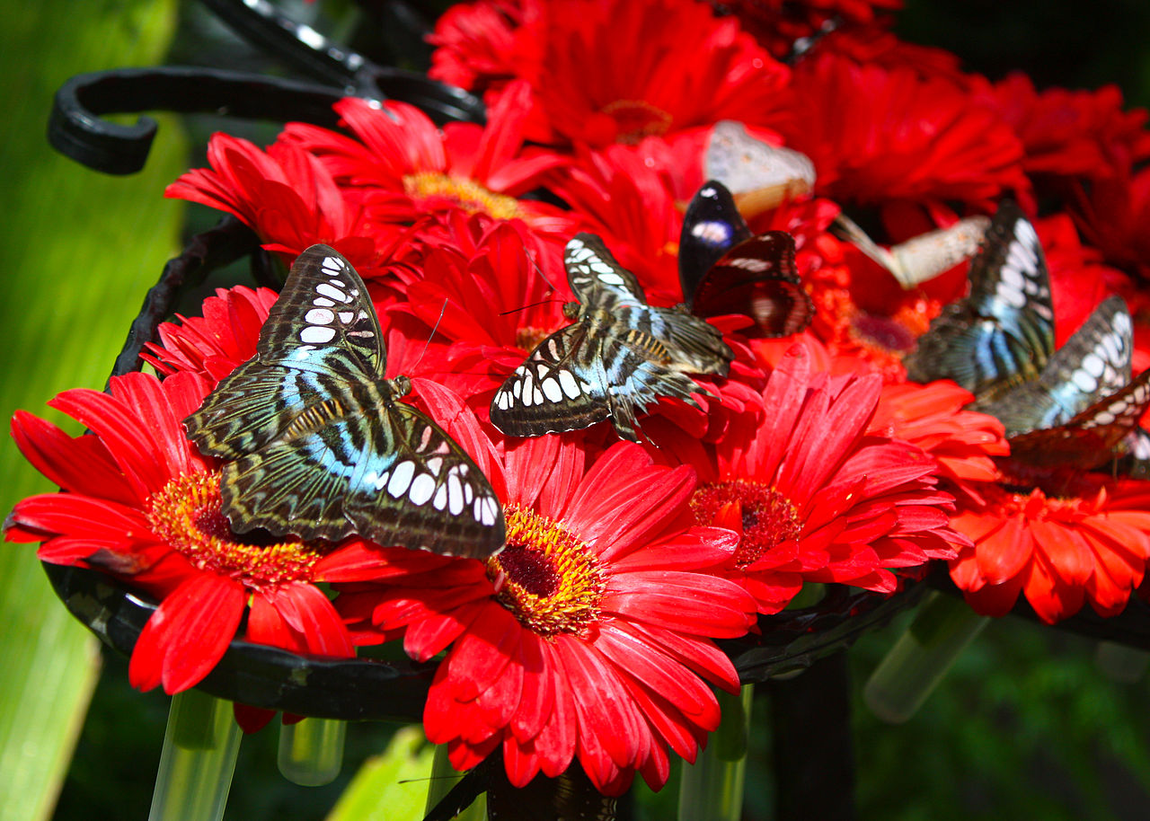 FileButterfly Garden At Changi Airport Singapore