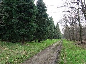 English: Dark green trees Dark green trees lin...