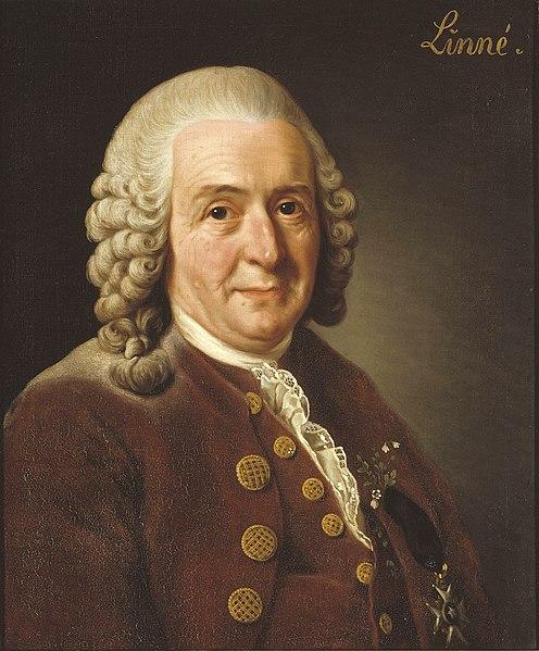 File:Carl von Linné.jpg