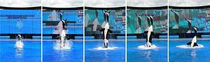 Sequence of trainer demonstrating a nose stand...