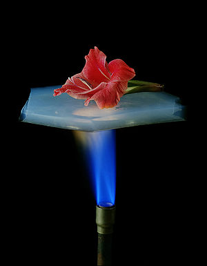 A flower is on a piece of aerogel which is sus...