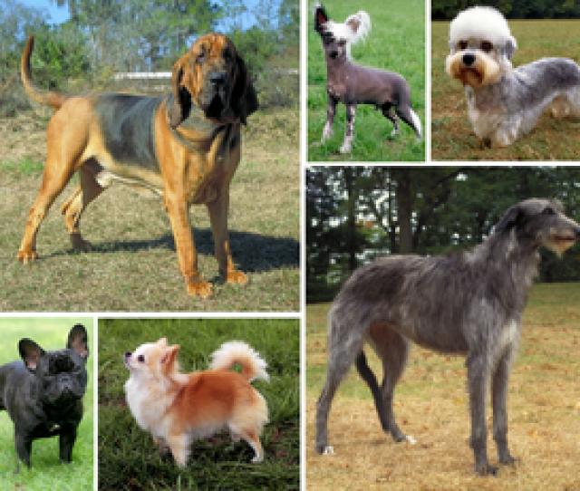 Dogs Show Great Morphological Variation