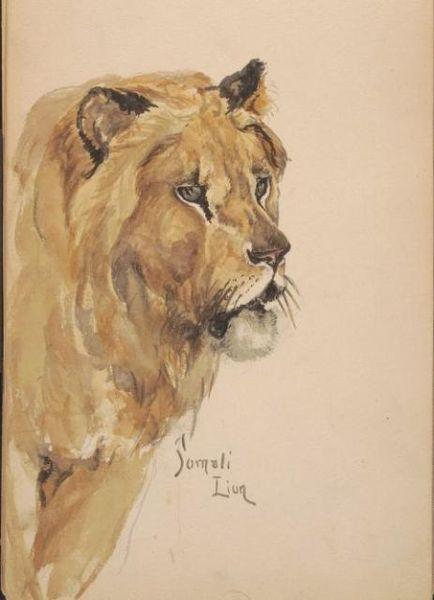 File:Lion Watercolor.jpg