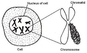 Anatomy and Physiology of AnimalsThe Cell  Wikibooks