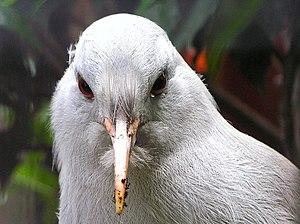 www.birdlife.org/datazone/search/species_searc...