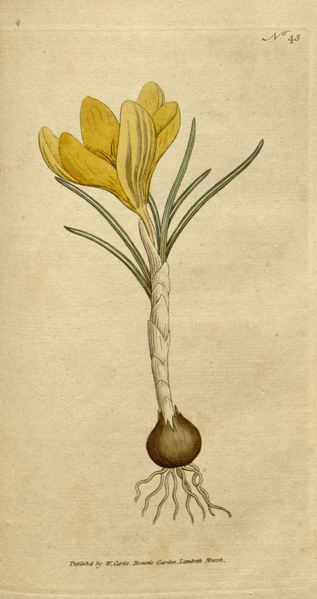 File:The Botanical Magazine, Plate 45 (Volume 2, 1788).png