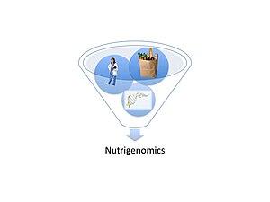 English: Nutrigenomics flow chart: research, F...