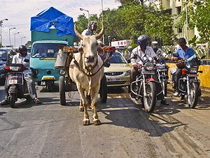 Various forms of transportation in Mumbai.
