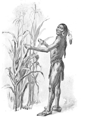 How Well The Corn Prospered. Squanto Indian fish fertilizer