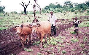Traditional farming in Guinea, West Africa