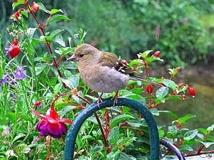 IMG 4662 - Birdie