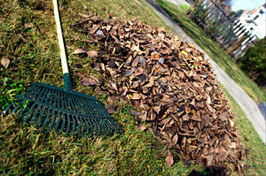 English: A leaf rake and a pile of leaves in a...