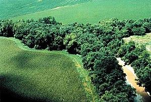 Riparian strip, Putnam County, Ohio, Lake Erie...