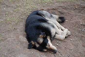 Stray dog - asleep