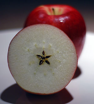 An image of an apple