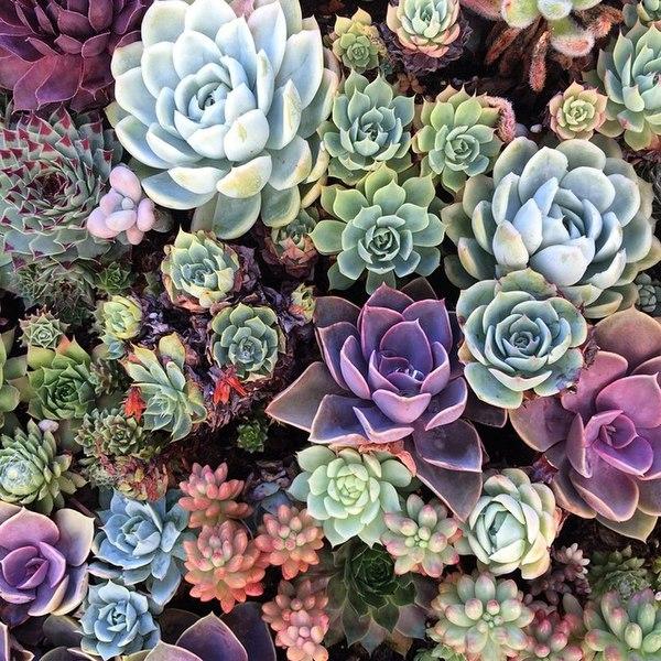 File:Incredible succulents pt 2. (14857217026).jpg