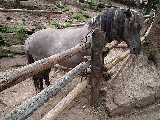 Wooden Rail Horse Gate
