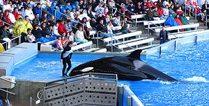 A SeaWorld trainer (possibly Dawn Brancheau) a...