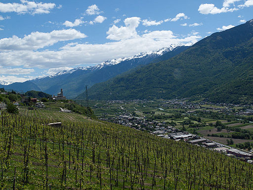 Valtellina, Italy vineyard