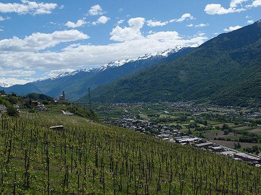 Valtellina, Italy vineyard