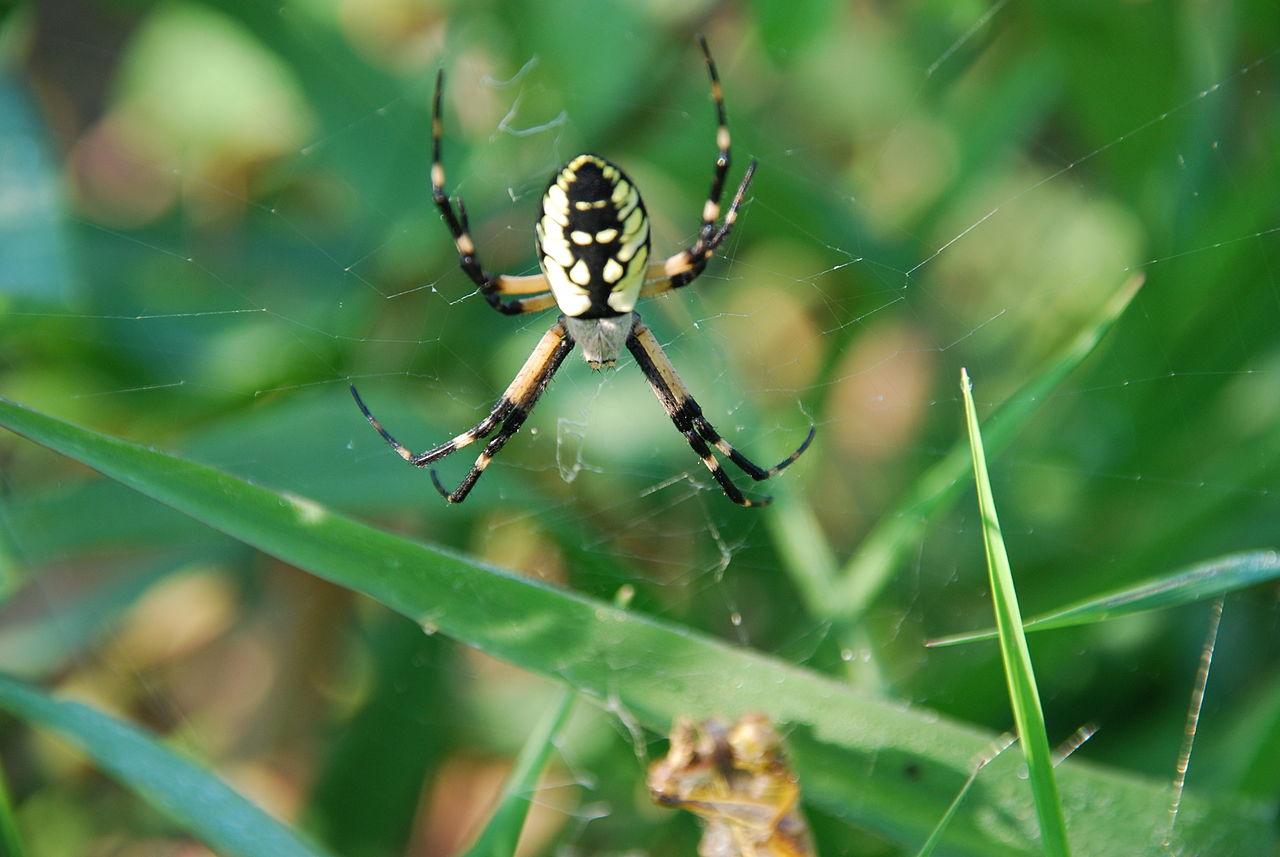 Spider Mission