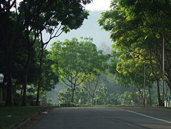 Hume Avenue overlooking Bukit Timah Hill