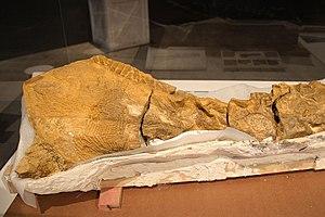 Hadrosauridae (Dakota) - 01
