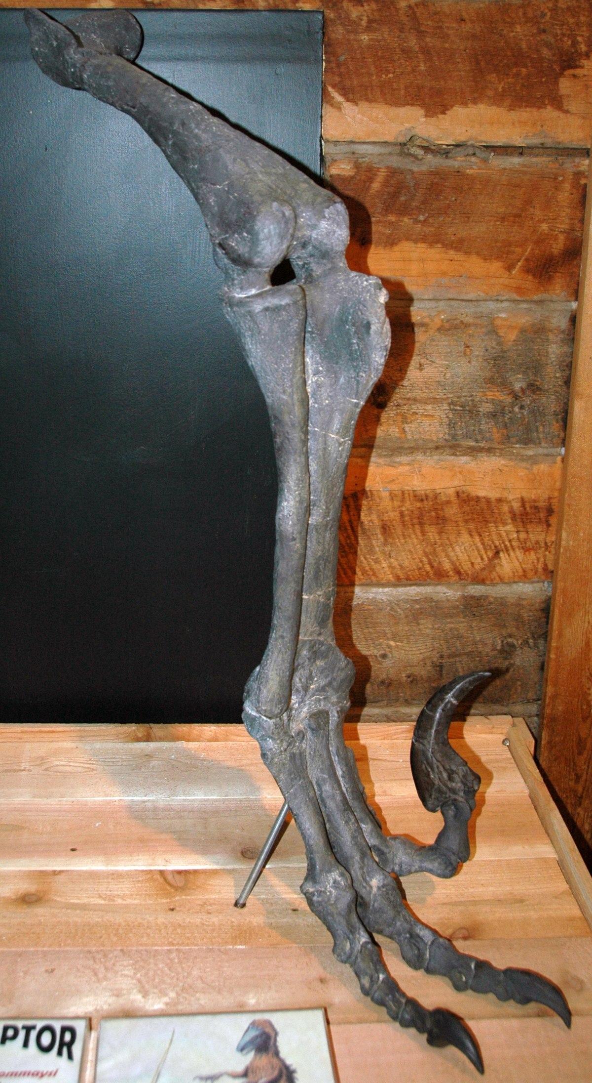 Utahraptor Wikipedia
