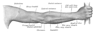 Back of right upper extremity.