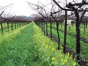 grgich winery, napa valley, California