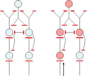 Simpel netwerk