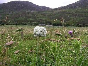 English: Wild plants, Leenankeel Some the loca...