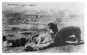 "Postcard written : ""Dead thrown to dogs (..."