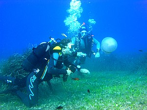 Scuba diving in Elba island, Italy