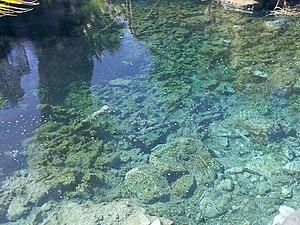 English: spring water