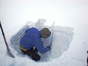 English: A person cutting a sample from a snow...