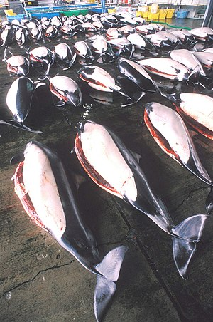 English: Dall's porpoises at market in Japan