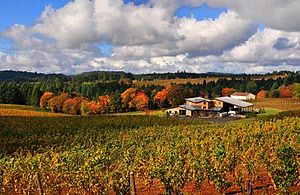 English: Trisaetum winery in the Ribbon Ridge ...